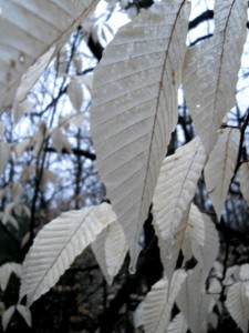white_leaves_at_night
