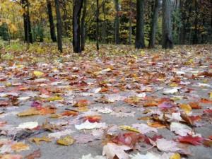 leafydriveway