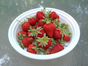 bowl_of_berries