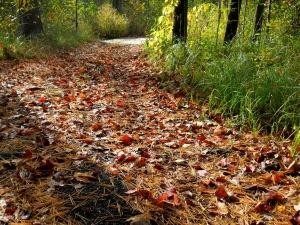 sunlit_trail