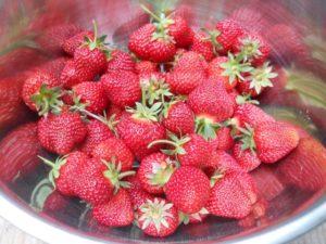 2016strawberries